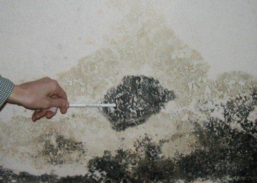 Mold sampling- Perfect Pollucon Services